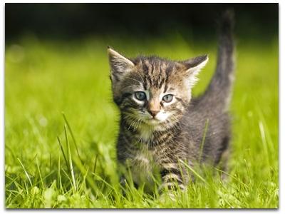 Sites de chat virtuel pour adolescents