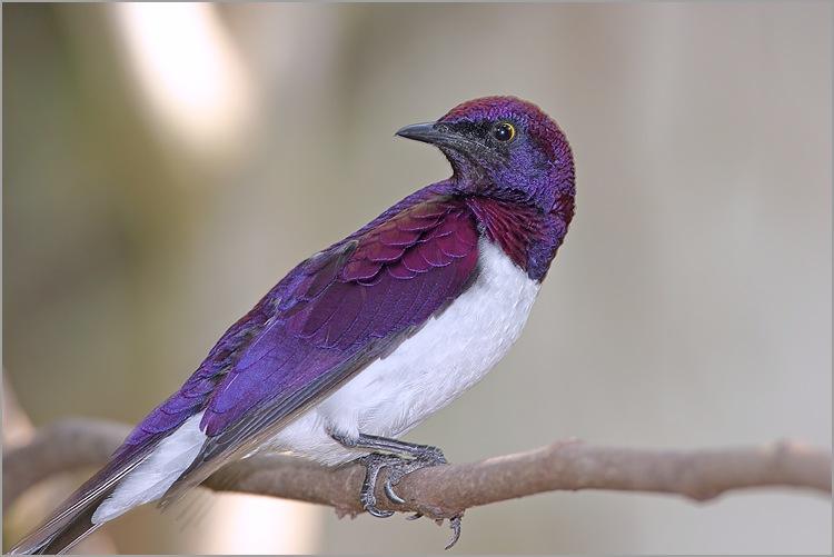 oiseaux saison 1
